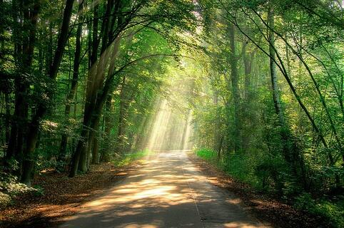 Shady path in a wood with beams of sunlight