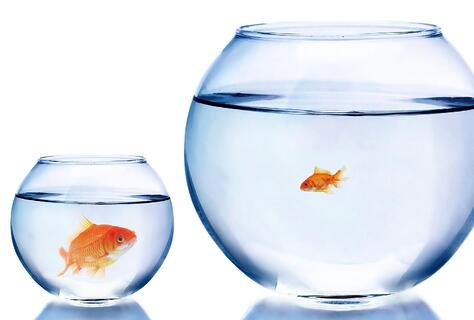 Big goldfish in a small bowl and a small goldfish in a large bowl