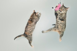 cats have fun in b2b marketing
