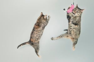 cats have fun in b2b marketing