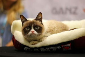 Social proof in marketing: Grumpy cat