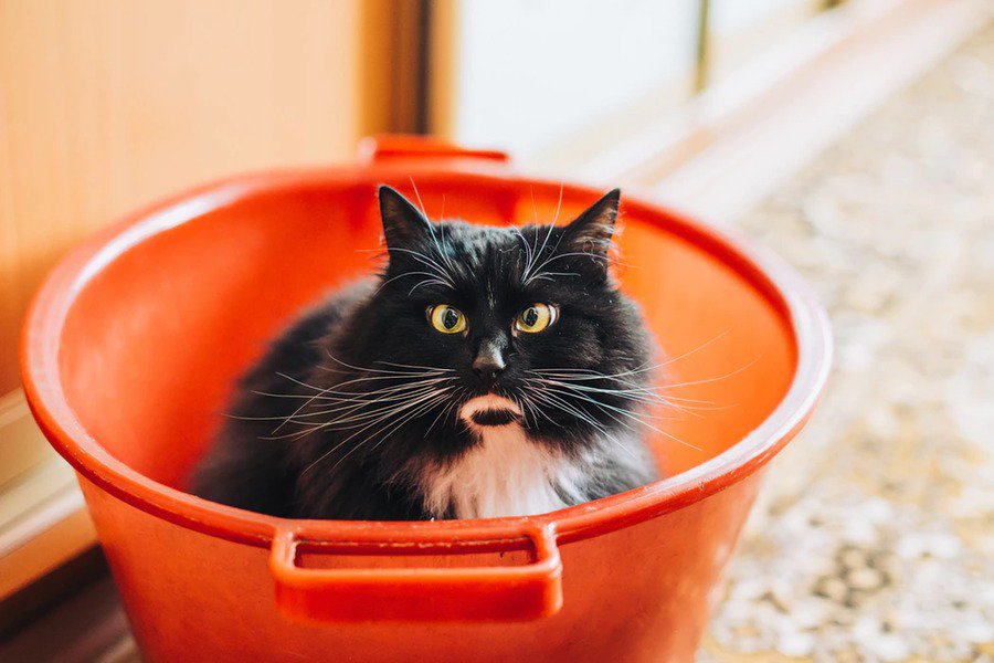 marketing email workflows lead nurturing by buckets - cat in a bucket
